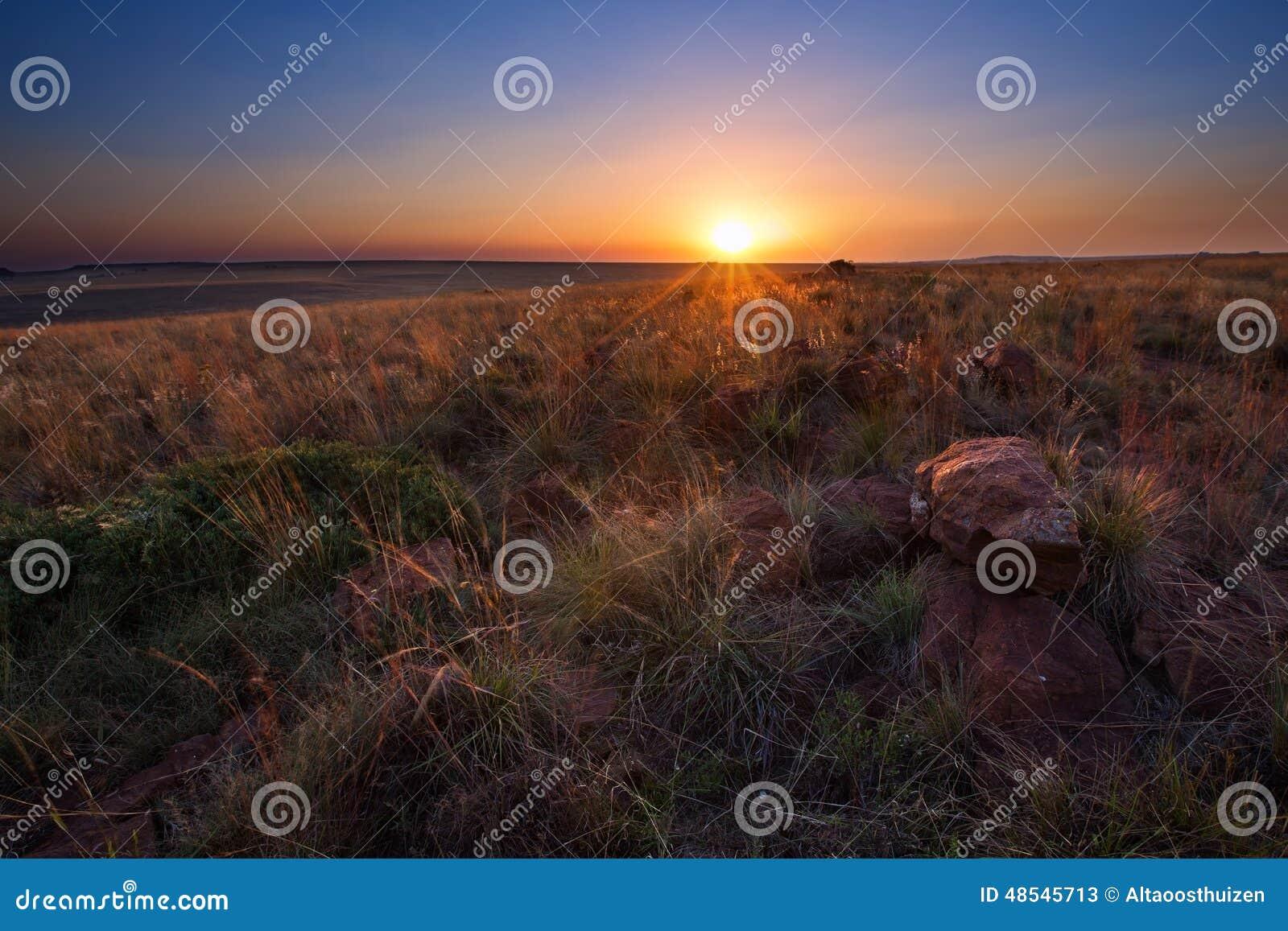 Magisk solnedgång i Afrika med ett ensamt träd på kullen och inga moln