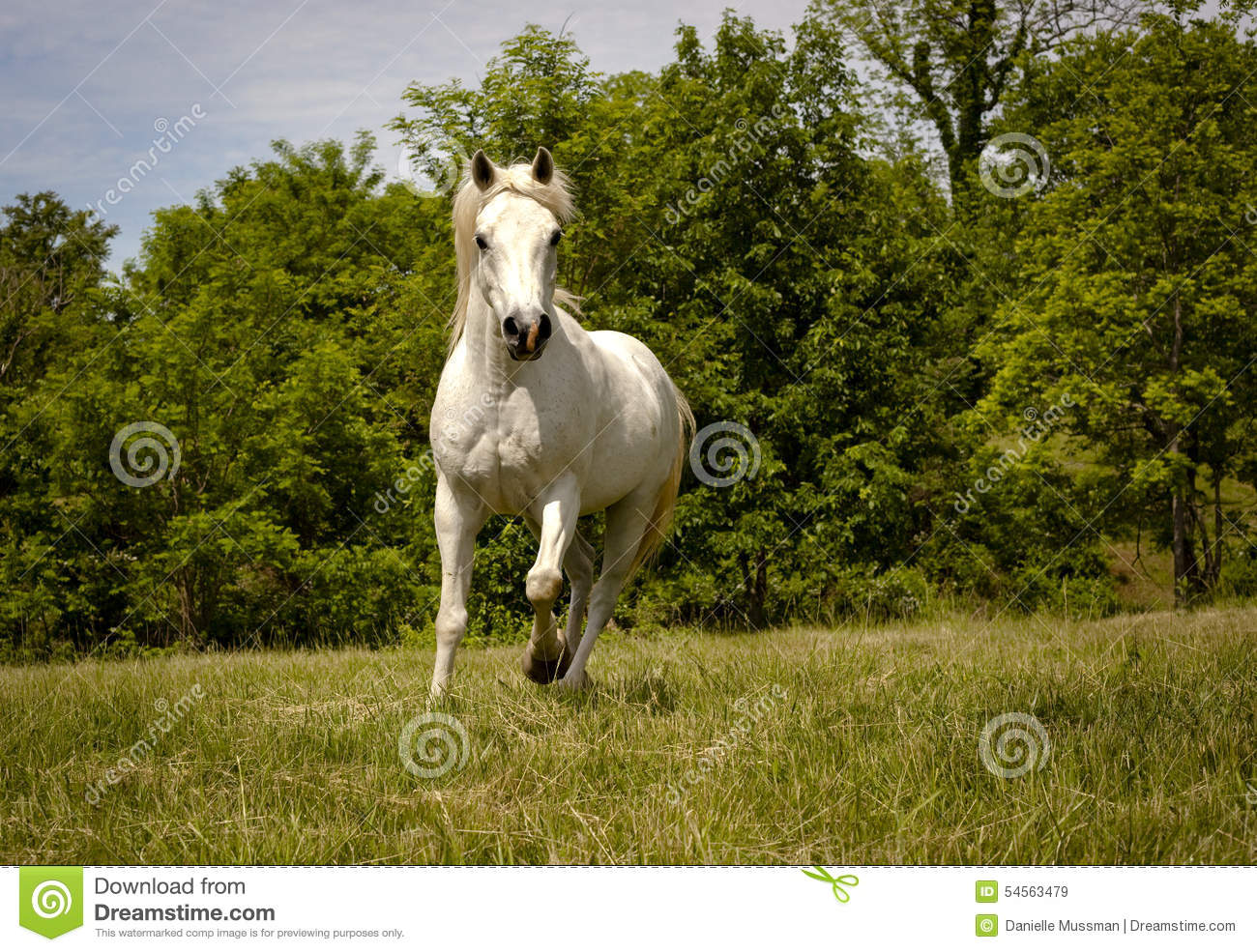 white horse running id - photo #3