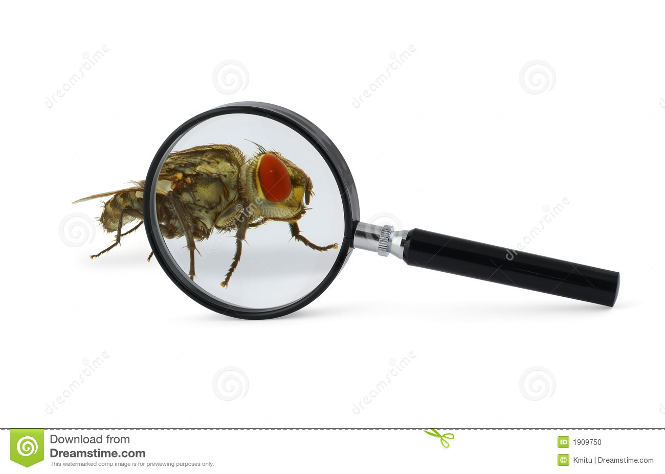 Magnified Fly Insect Stock Photo - Image: 1909750