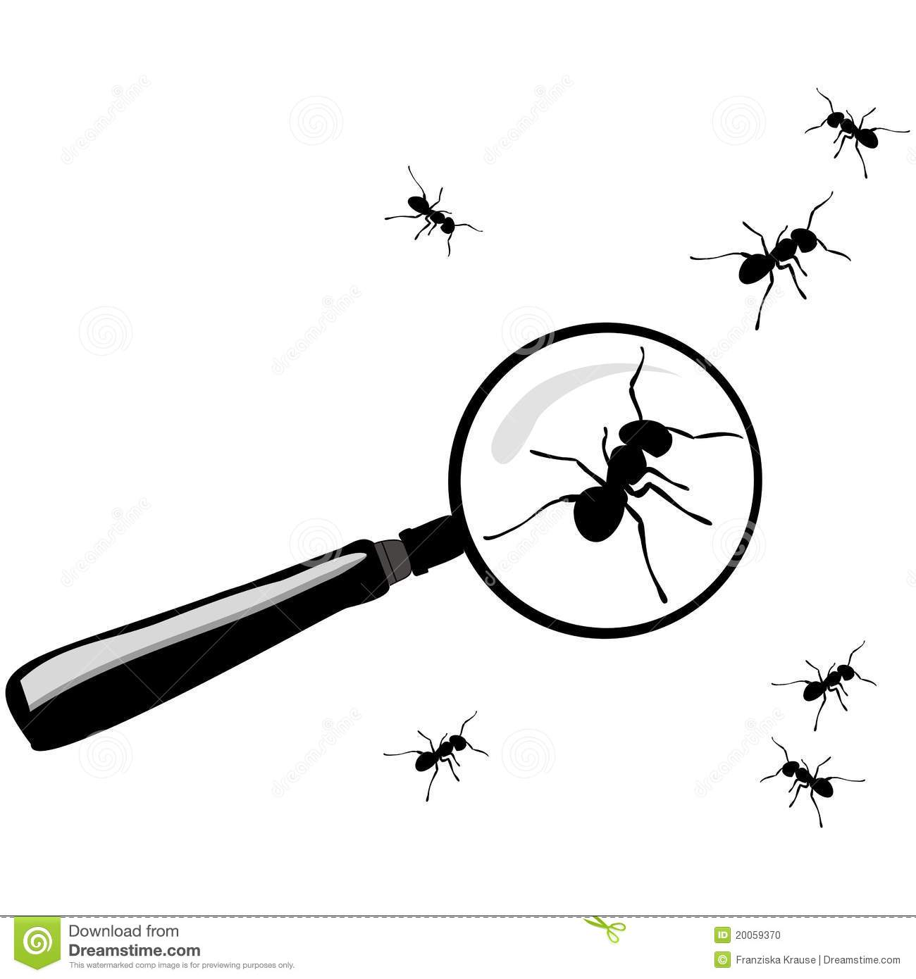 Magnifying Glass With Ants Stock Photo Image 20059370