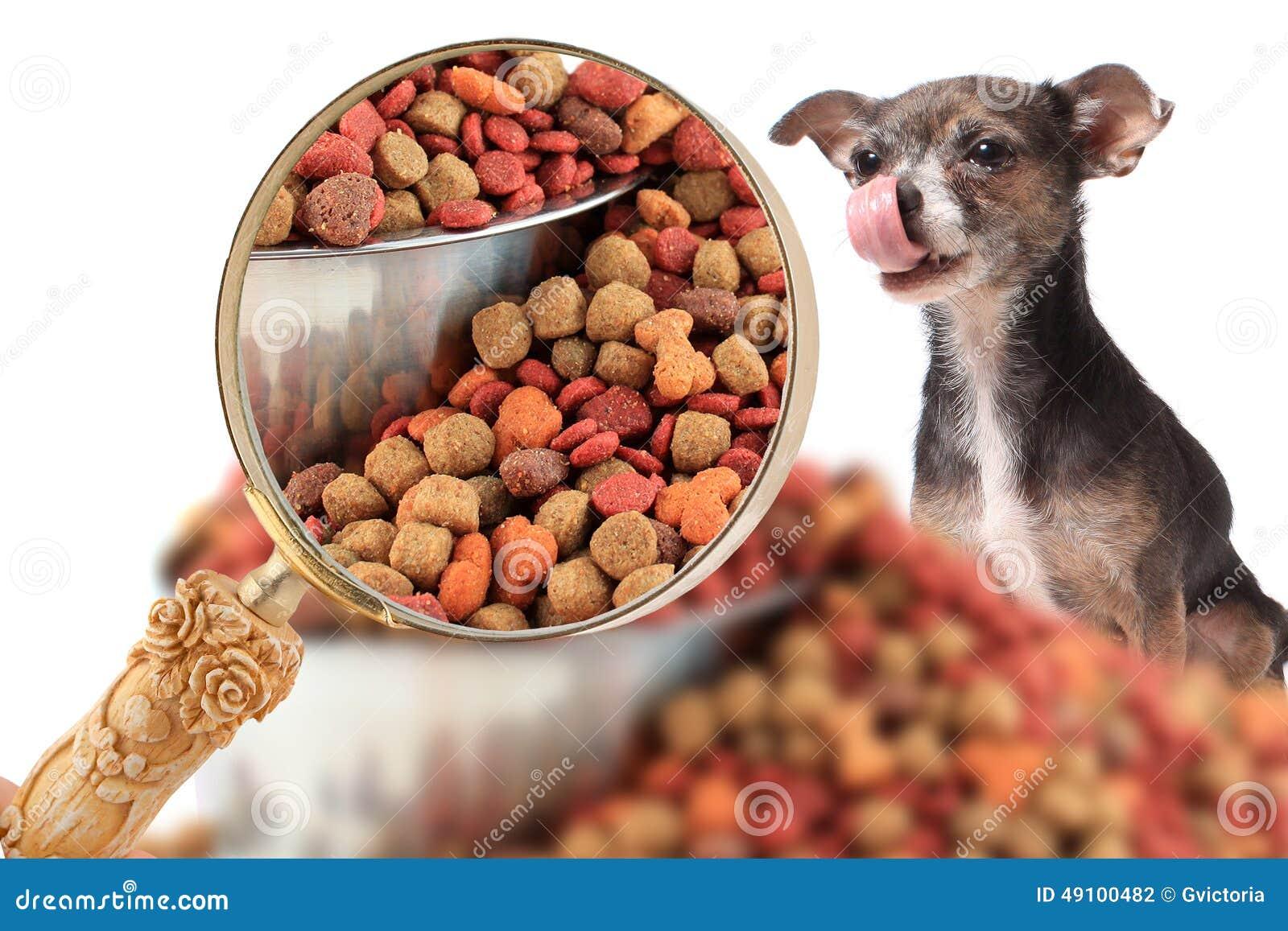 Magnigying dedans sur la nutrition de chien