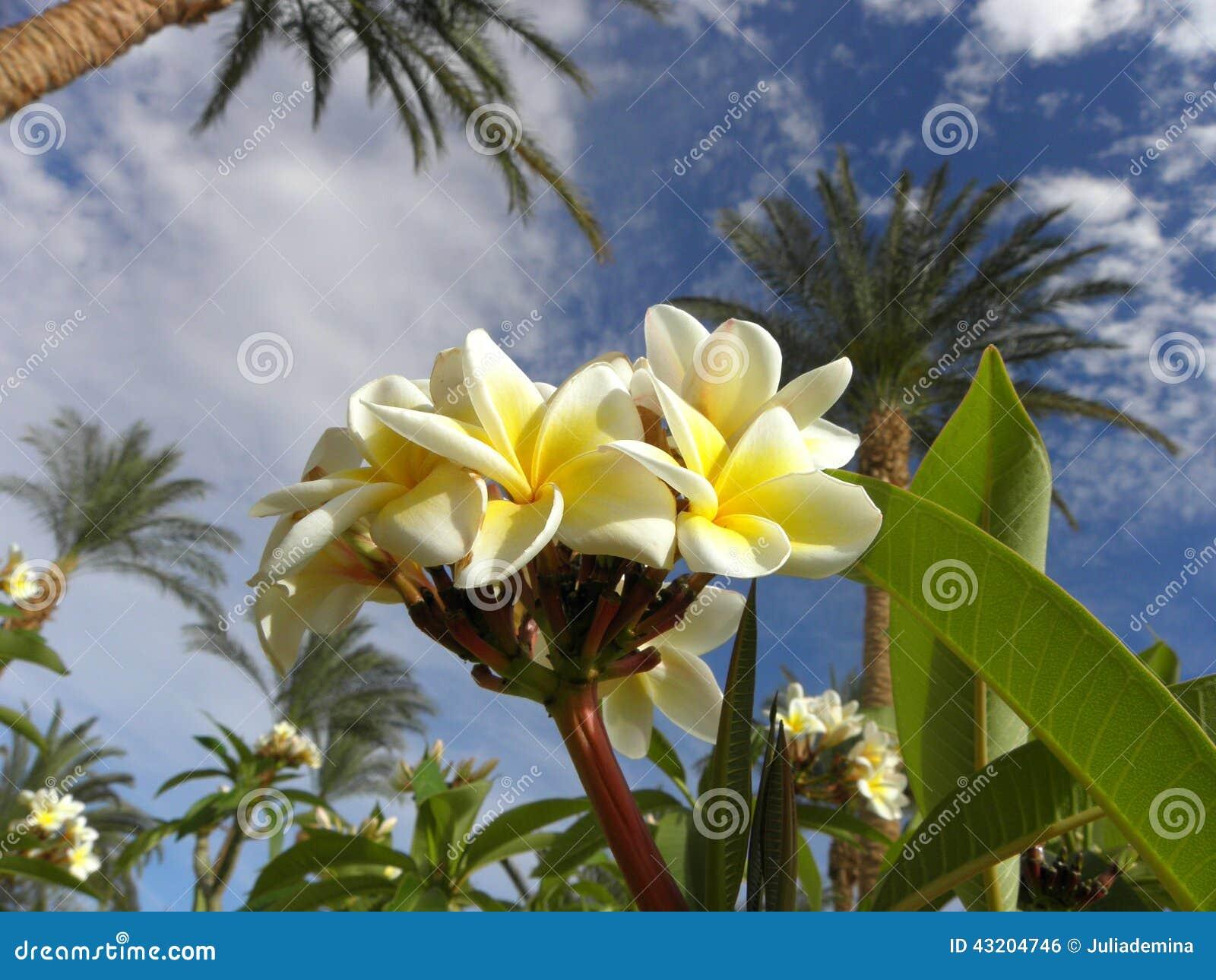Download Magnolia arkivfoto. Bild av trees, leaves, leaf, säsong - 43204746