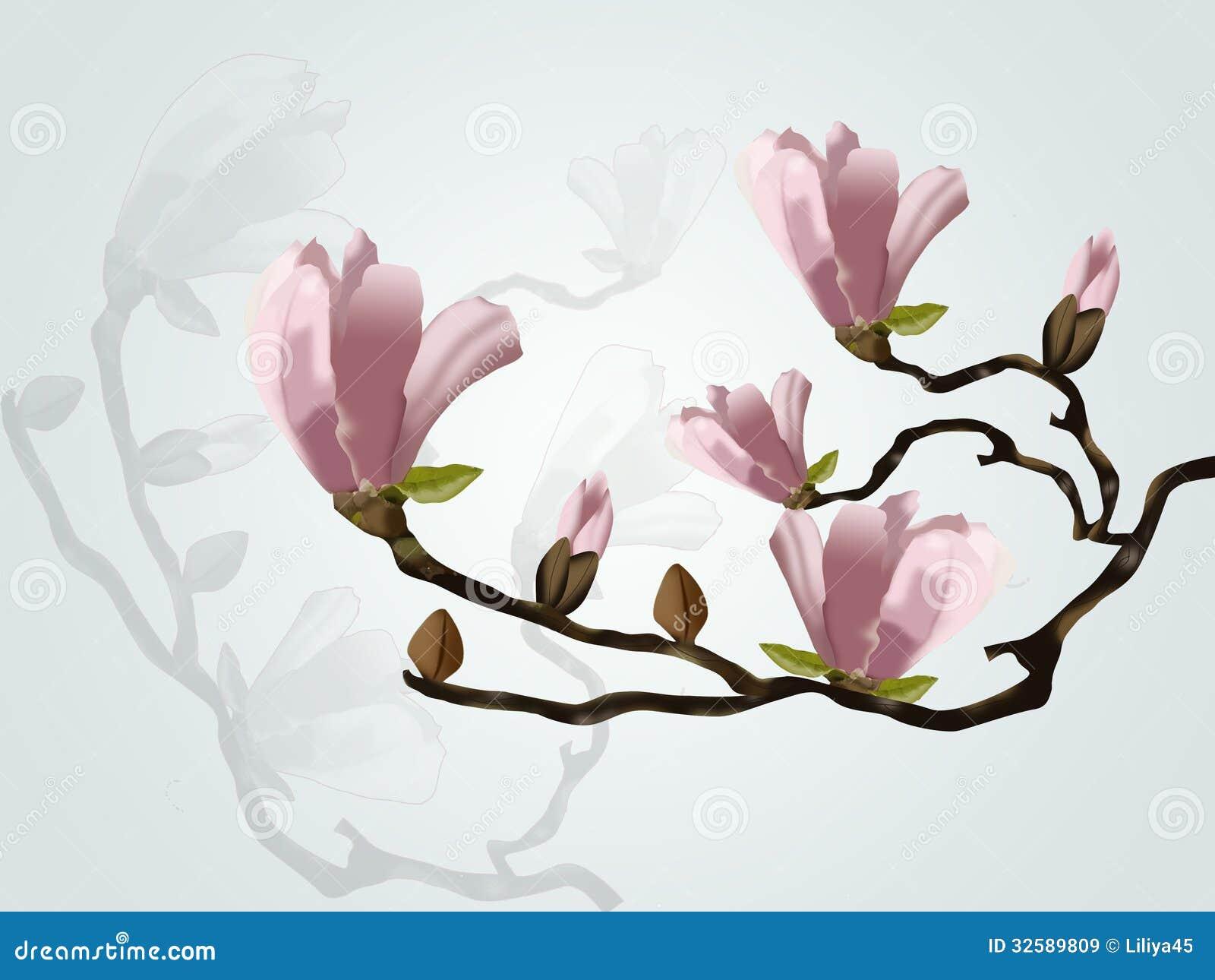 magnolia branch clip art - photo #37