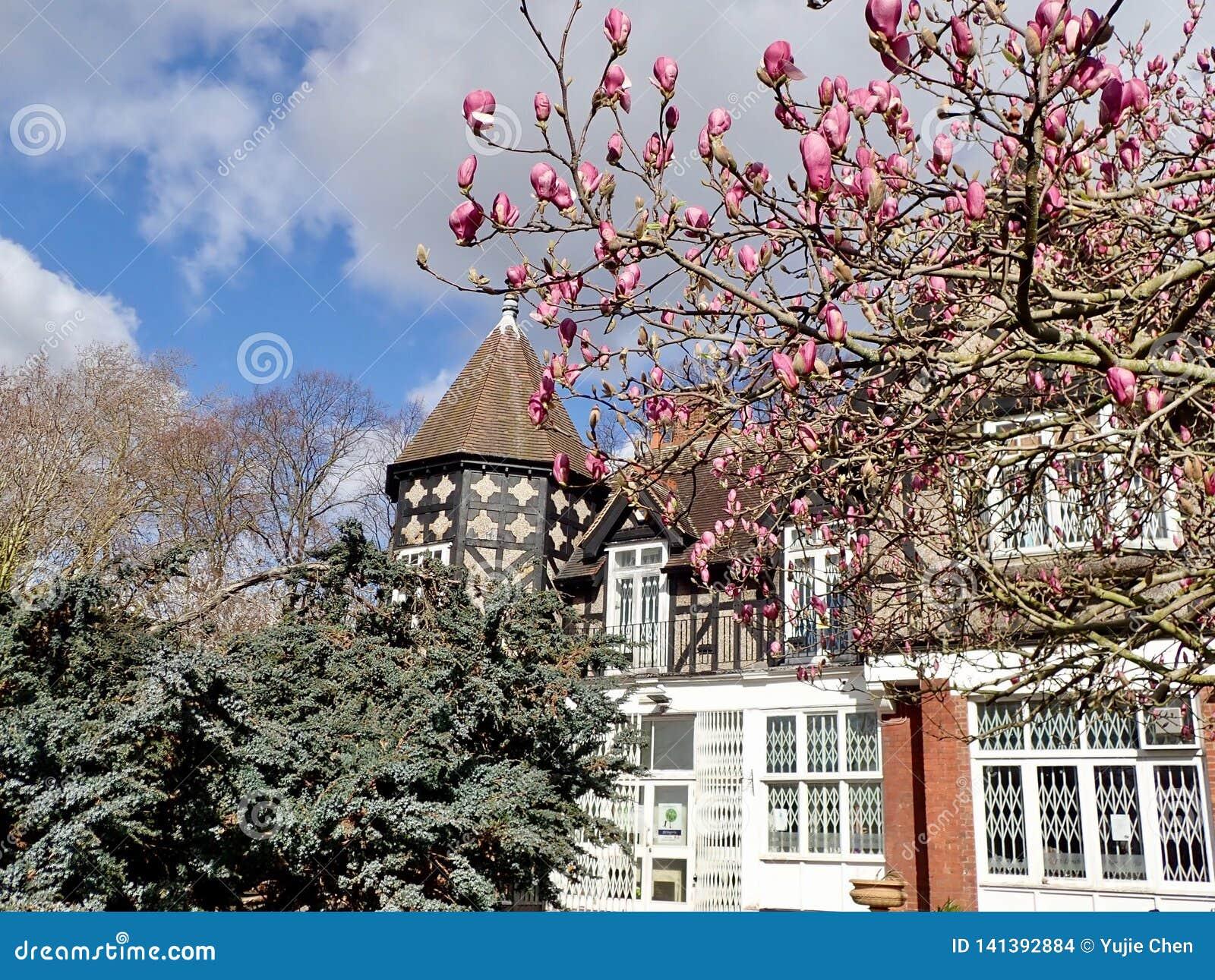 Magnolia che fiorisce in primavera
