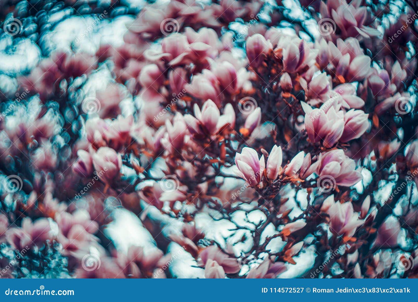 Magnolia dedans swirly
