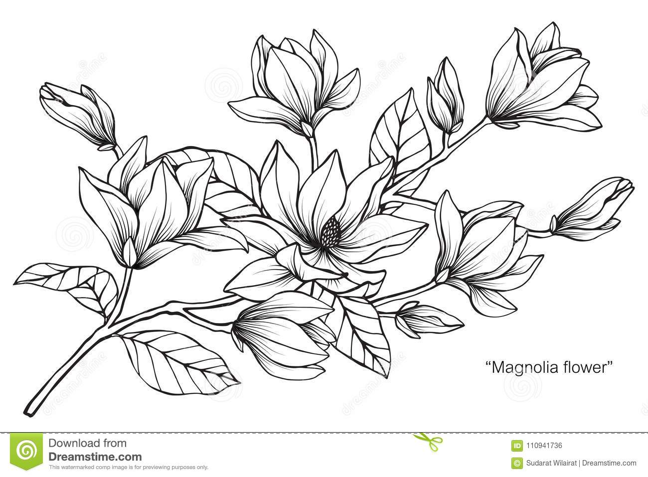 Magnolia flower drawing illustration black and white with line art download magnolia flower drawing illustration black and white with line art stock illustration mightylinksfo