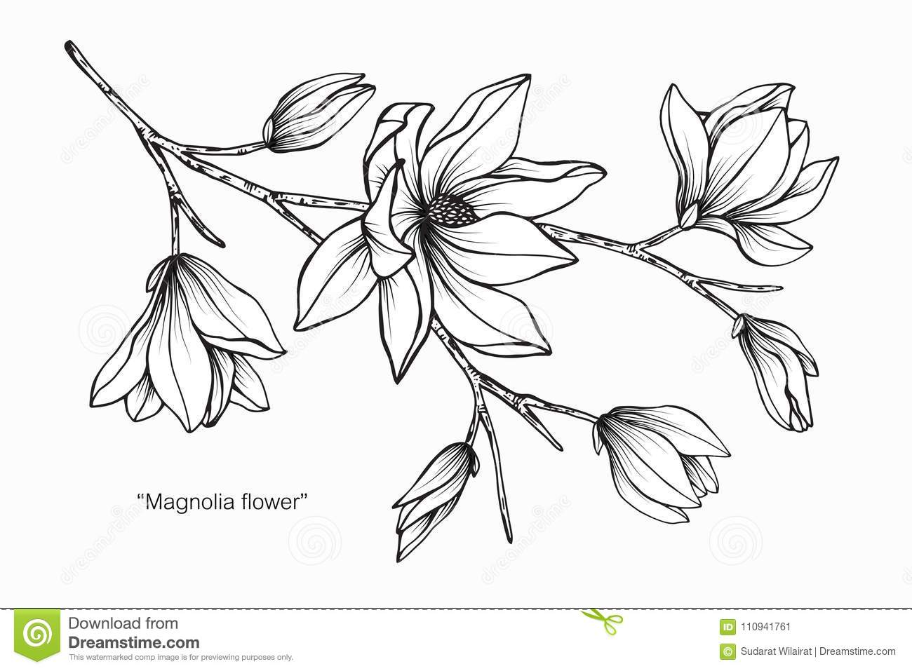 This is a photo of Massif White Flower Drawing