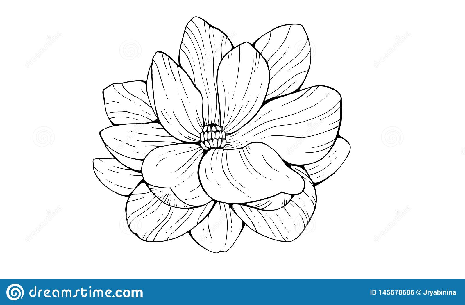 Magnolia Flower In Contour Style Isolated On White Background
