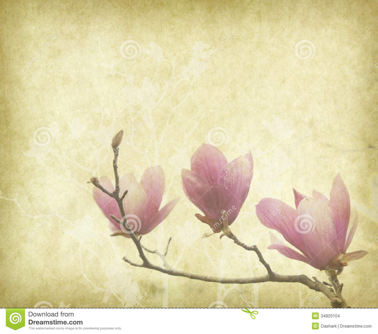 Magnolia Flower With Old Antique Vintage Paper Stock