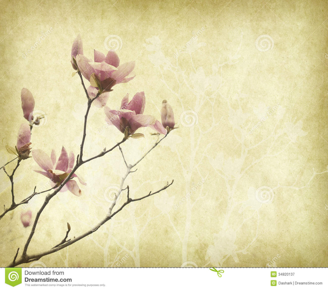 Magnolia Flower With Old Antique Vintage Paper Stock Image Image