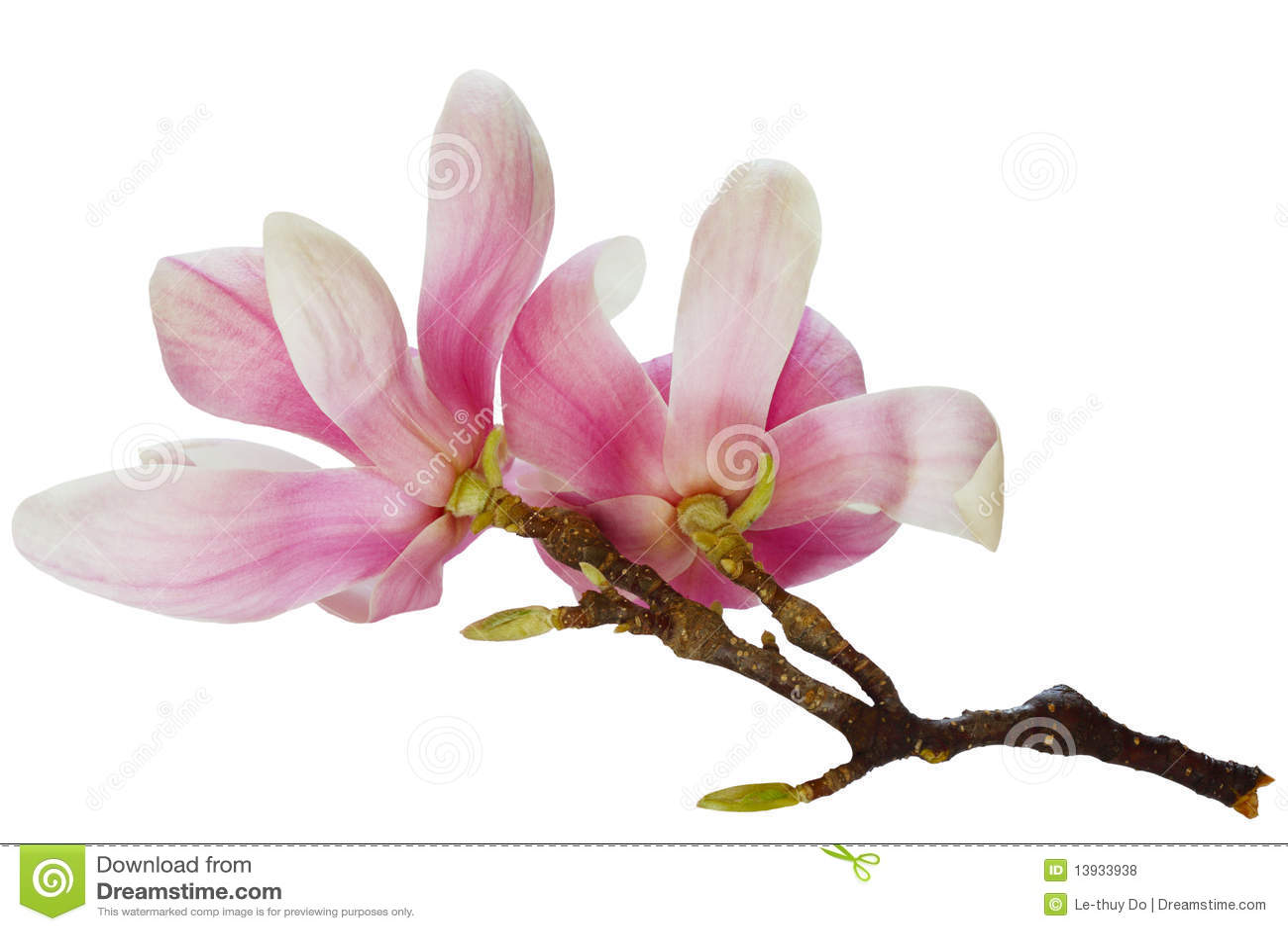 magnolia branch clip art - photo #21