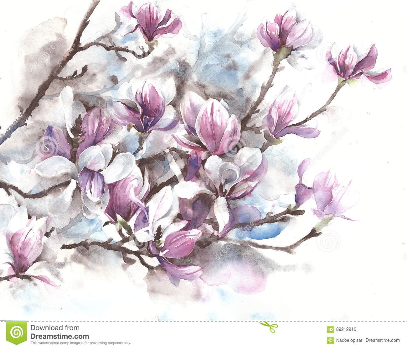 Magnolia Flowers Blooming Spring Blossom Magnolia Tree Watercolor