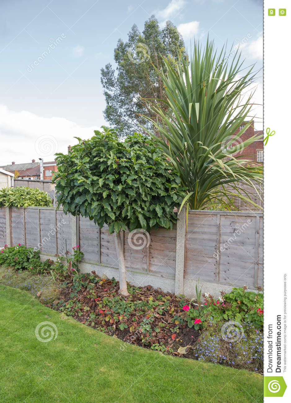 Magnolia Tree In The Garden Flower Bed Stock Photo Image Of Shot