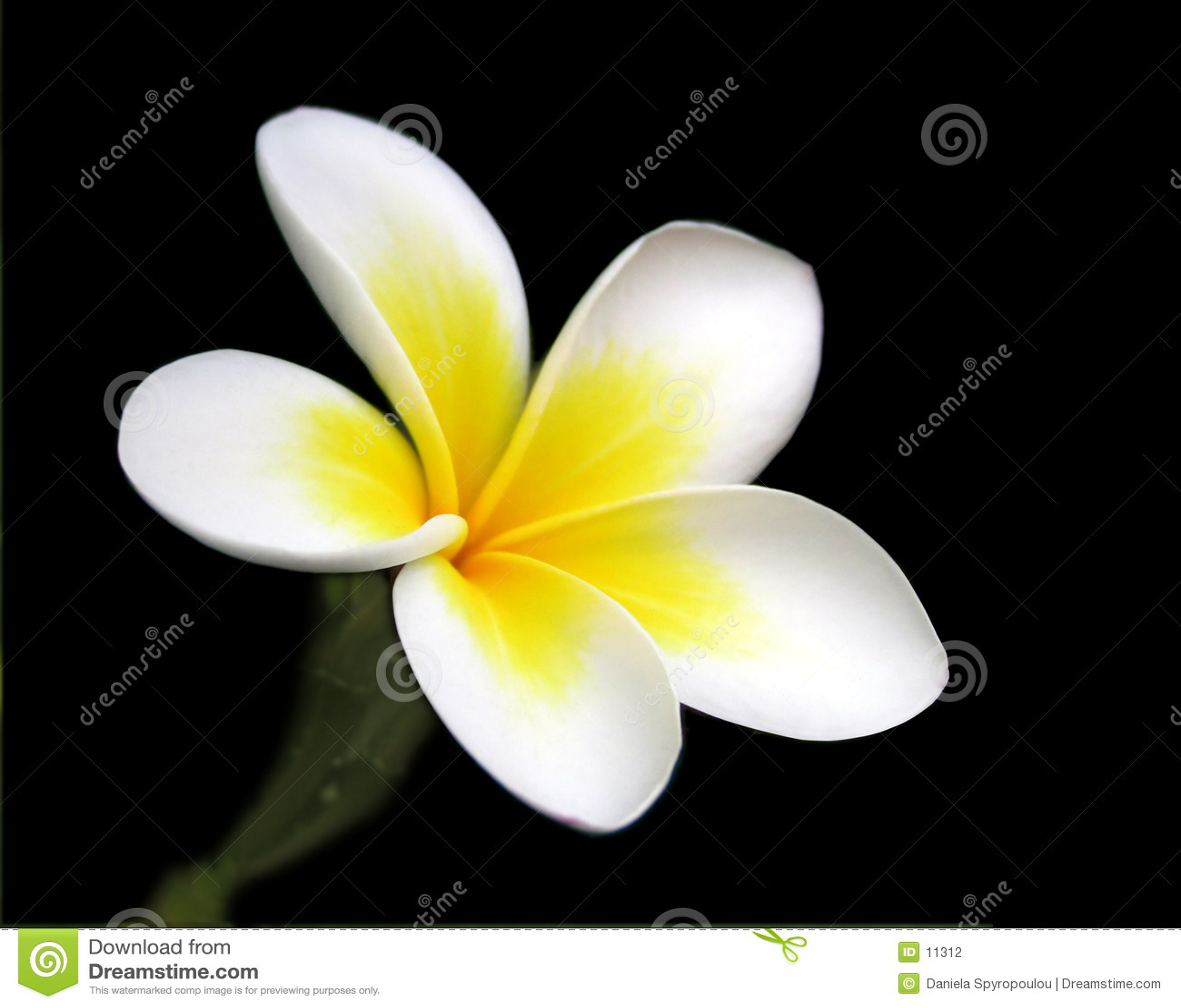 Download Magnolie stockfoto. Bild von element, hintergrund, gärten - 11312