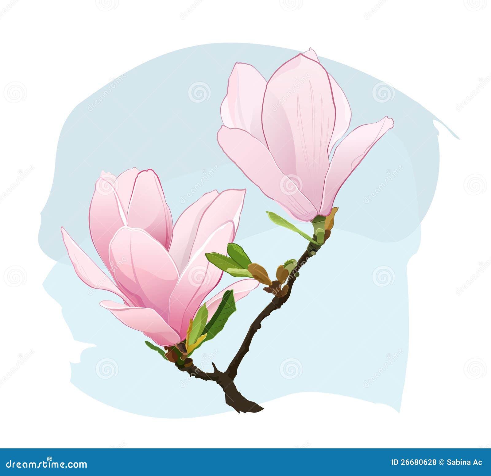 Magnolie-Blumen