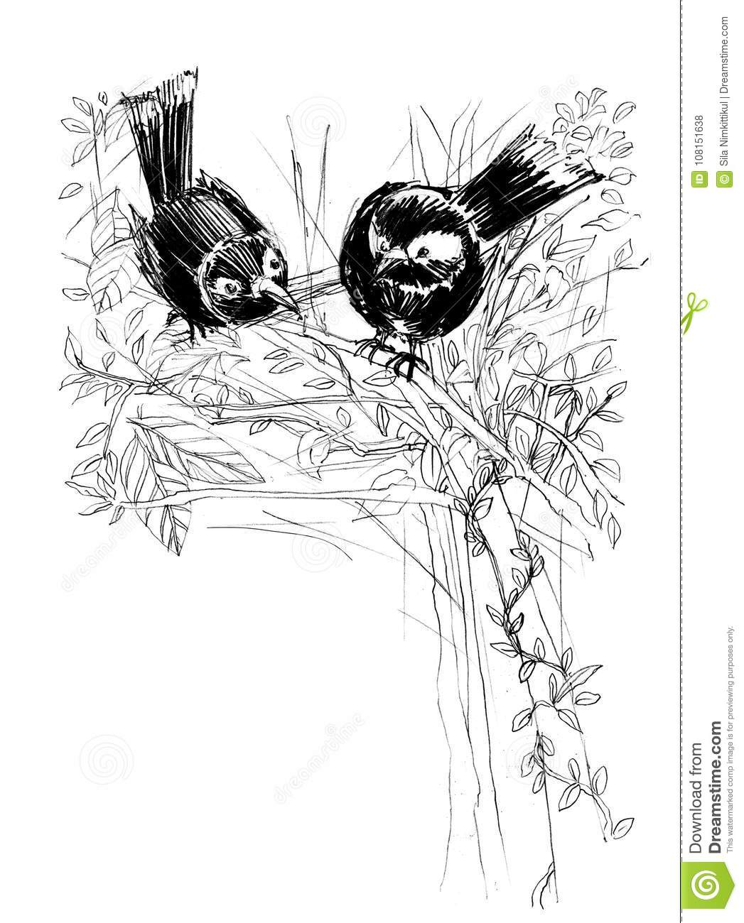 Magpie bird with love cute acting design pencil sketch from real download preview