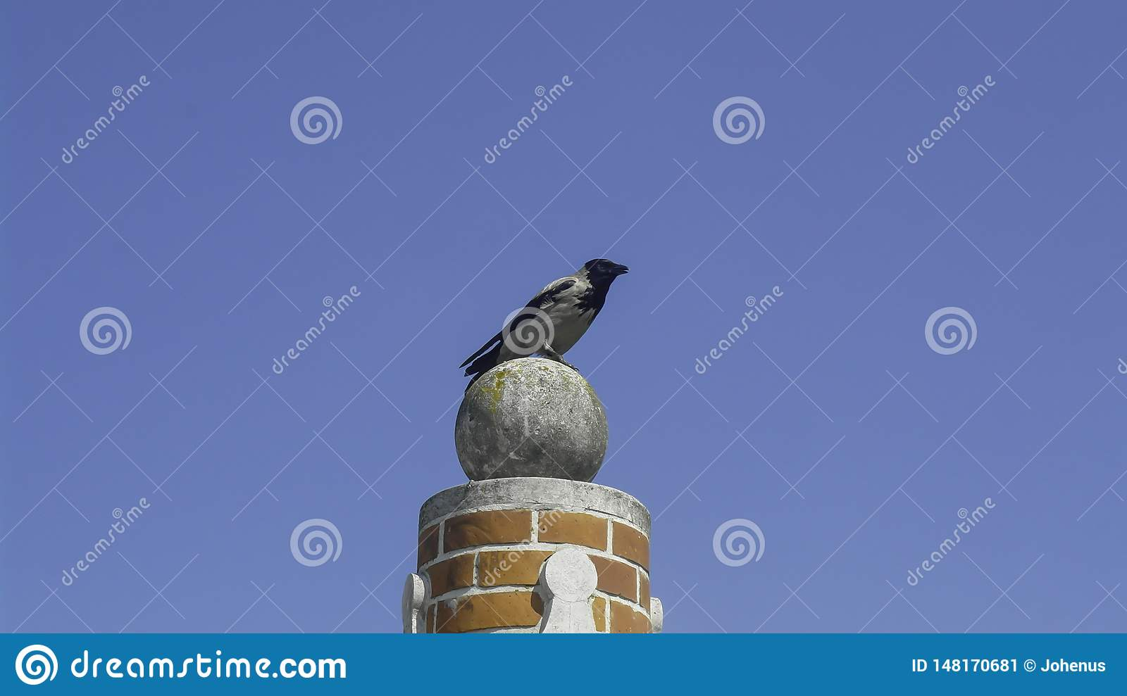 A magpie sits on a column
