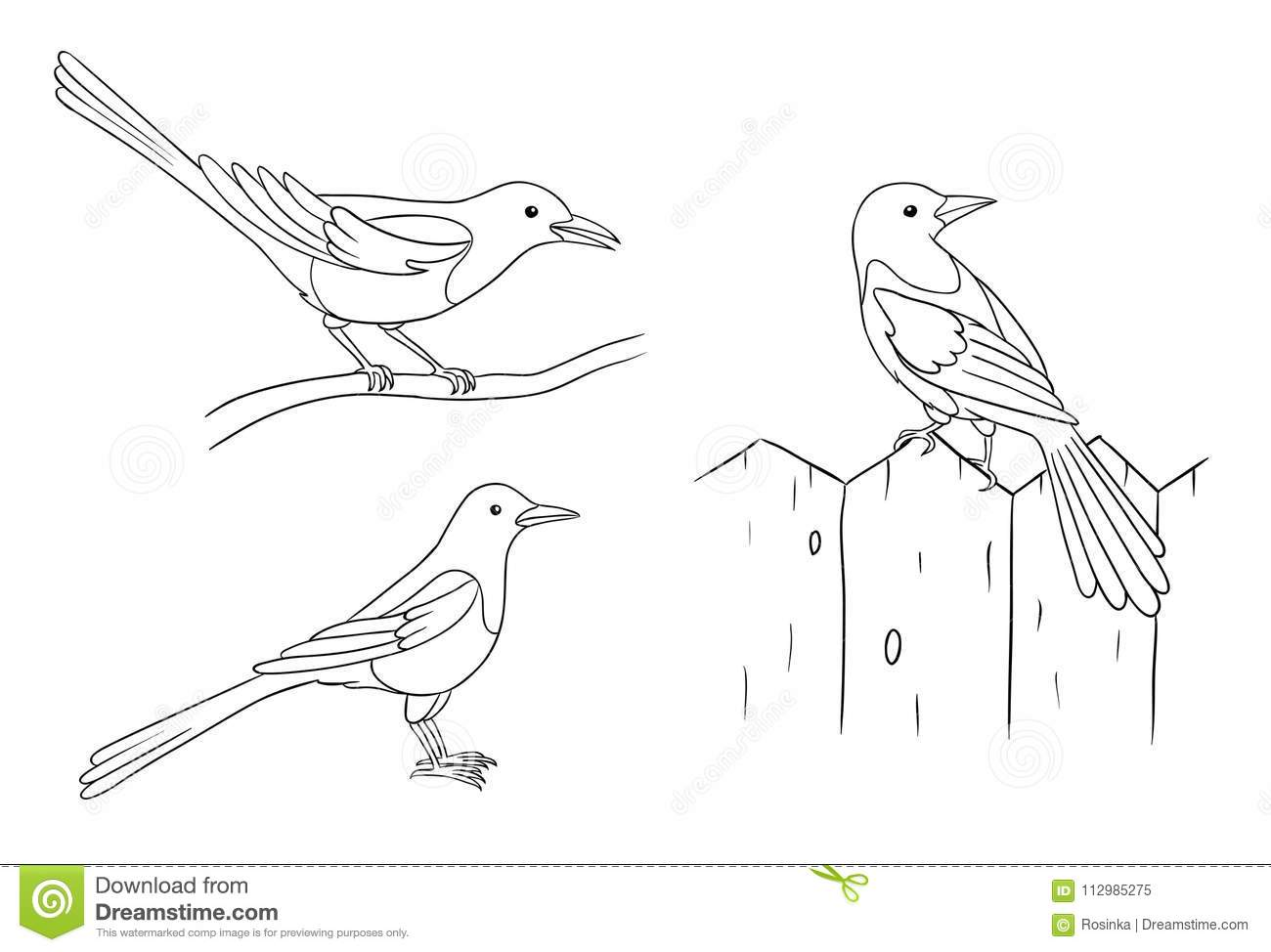 Magpies in contours - vector illustration