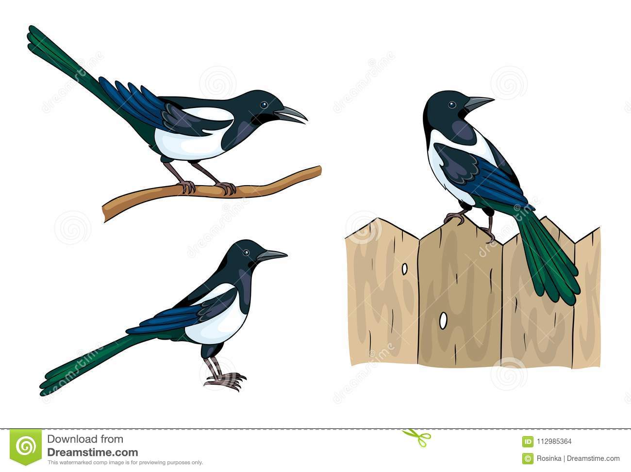 Magpies - vector illustration