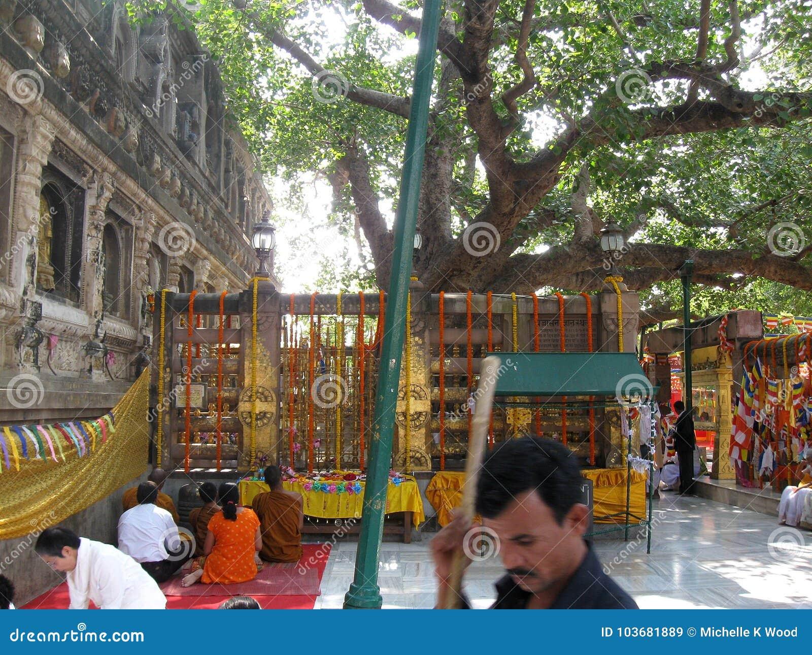 People Meditating beneath Bodhi Tree - Great Buddha Mahabodhi Mahavihara Temple BodhGaya India