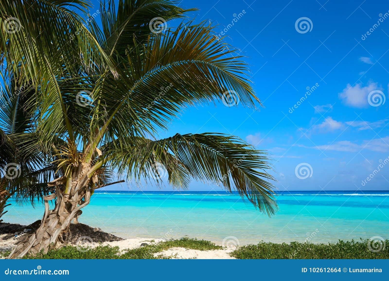 Mahahual Caribbean Beach In Costa Maya Stock Photo Image Of American Shore 102612664