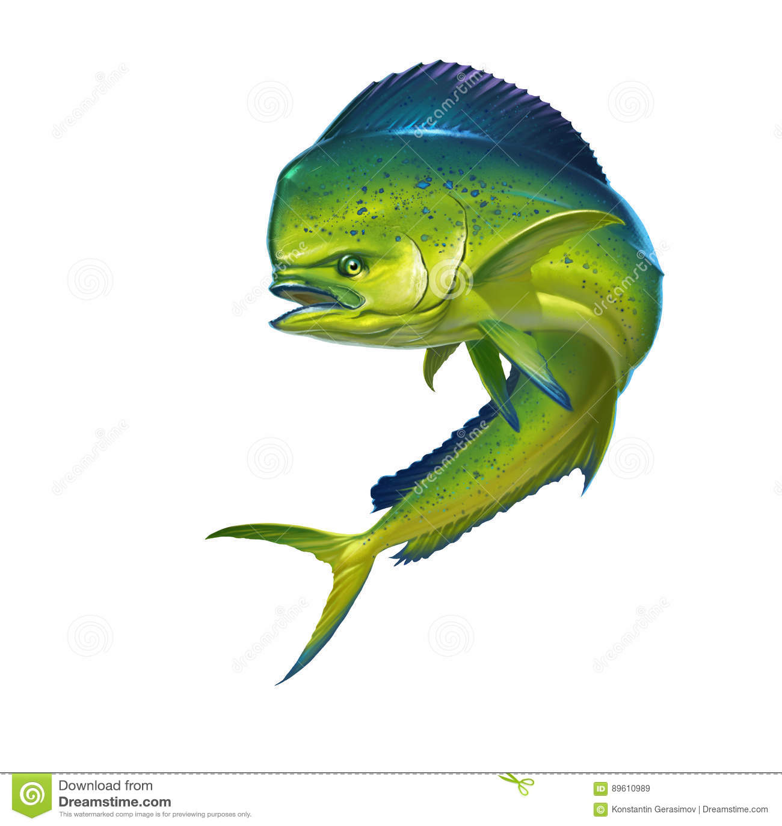 Mahi Mahi ryba