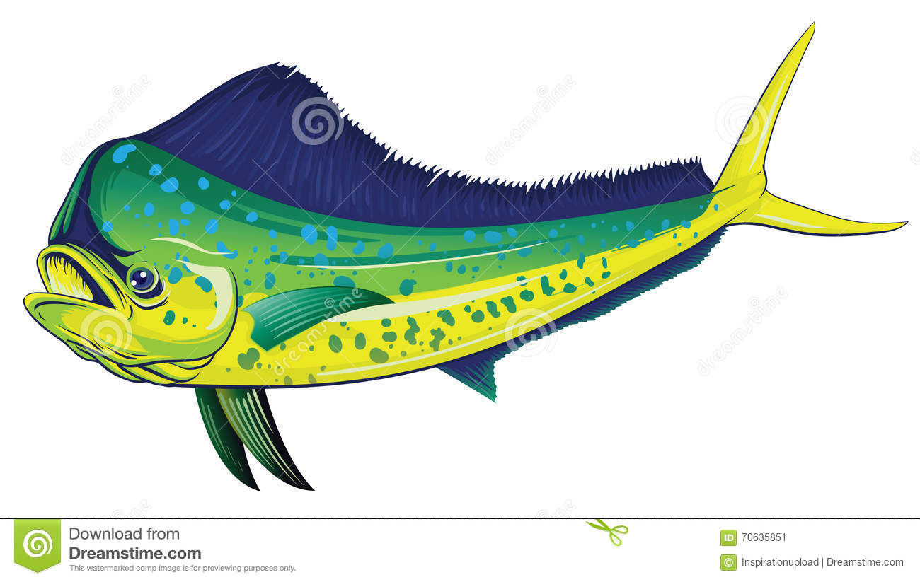 Mahi Mahi stock vector. Illustration of ocean, fish, hawaiian - 70635851
