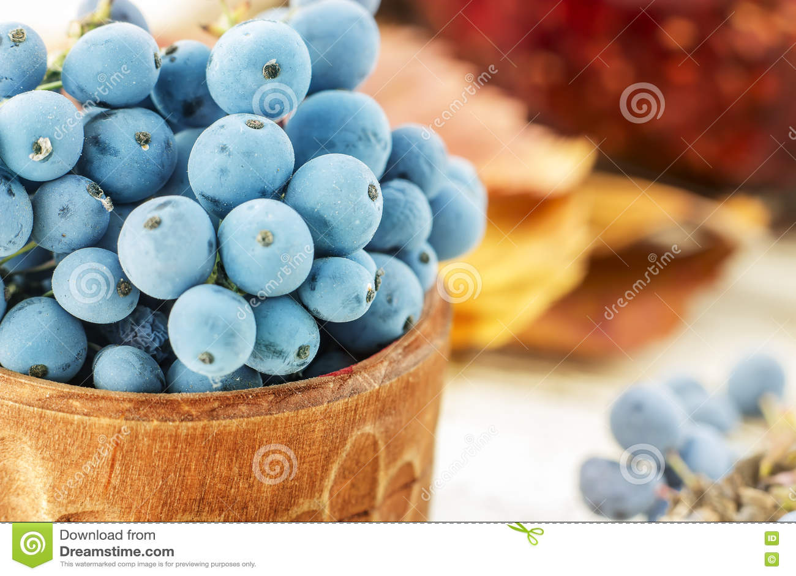 Mahonia fresco blu