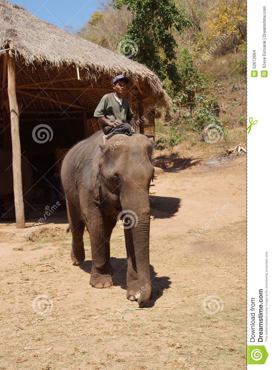 what is a mahout elephant