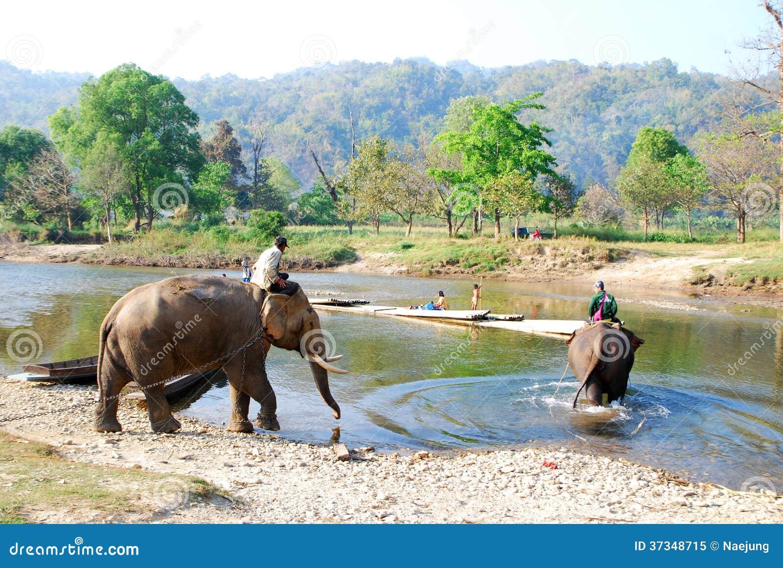 Mahout und Elefant