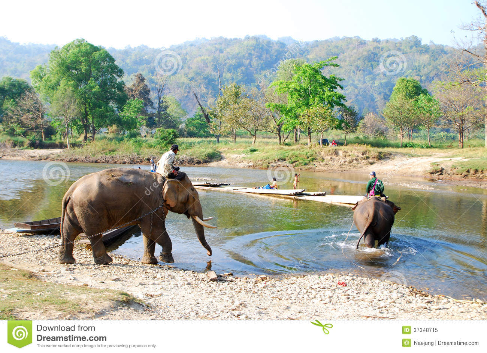Mahout y elefante
