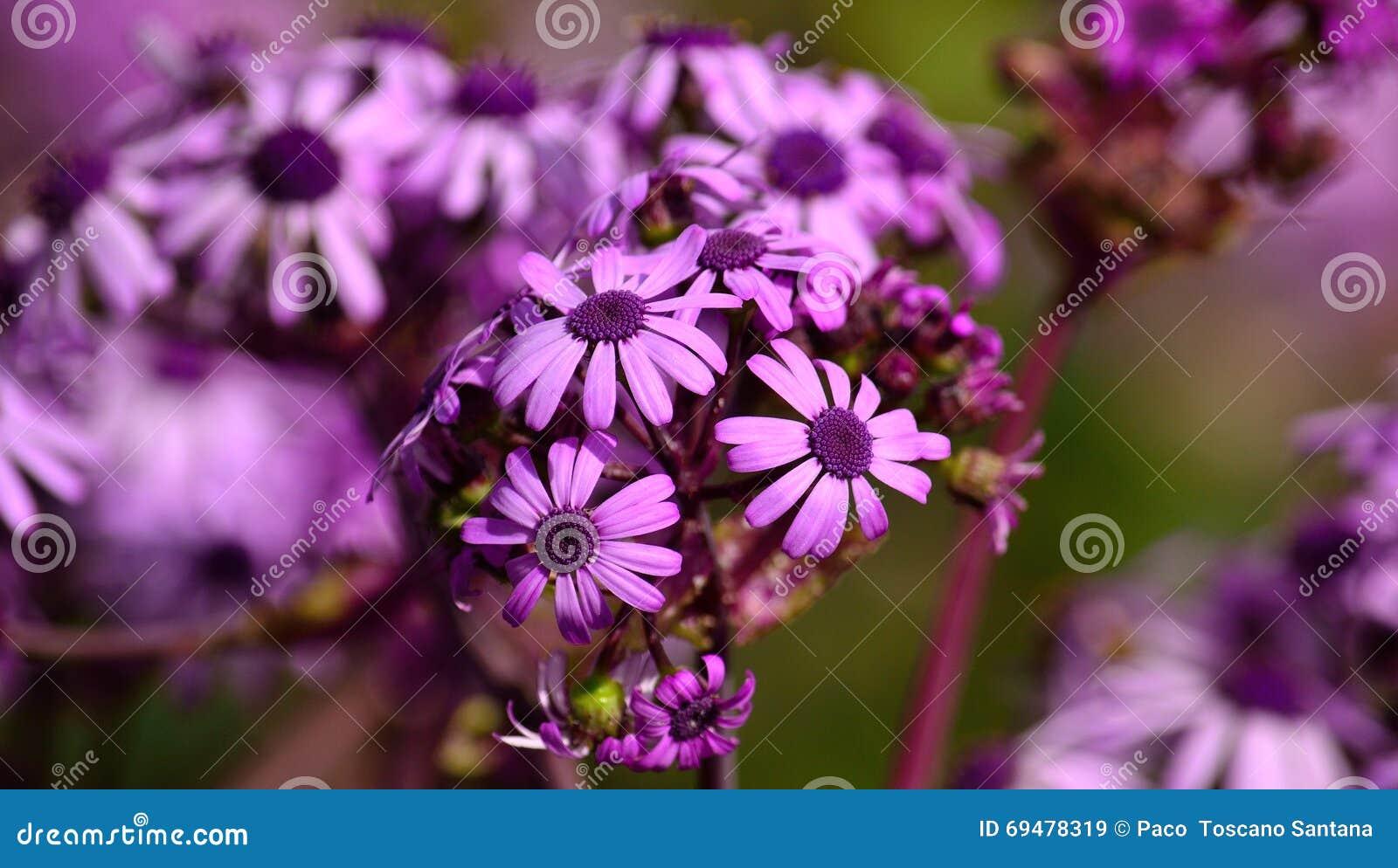 blumen im mai blumen im mai susi testet und bloggt maigl ckchen blumen pflanzen natur fr hling. Black Bedroom Furniture Sets. Home Design Ideas