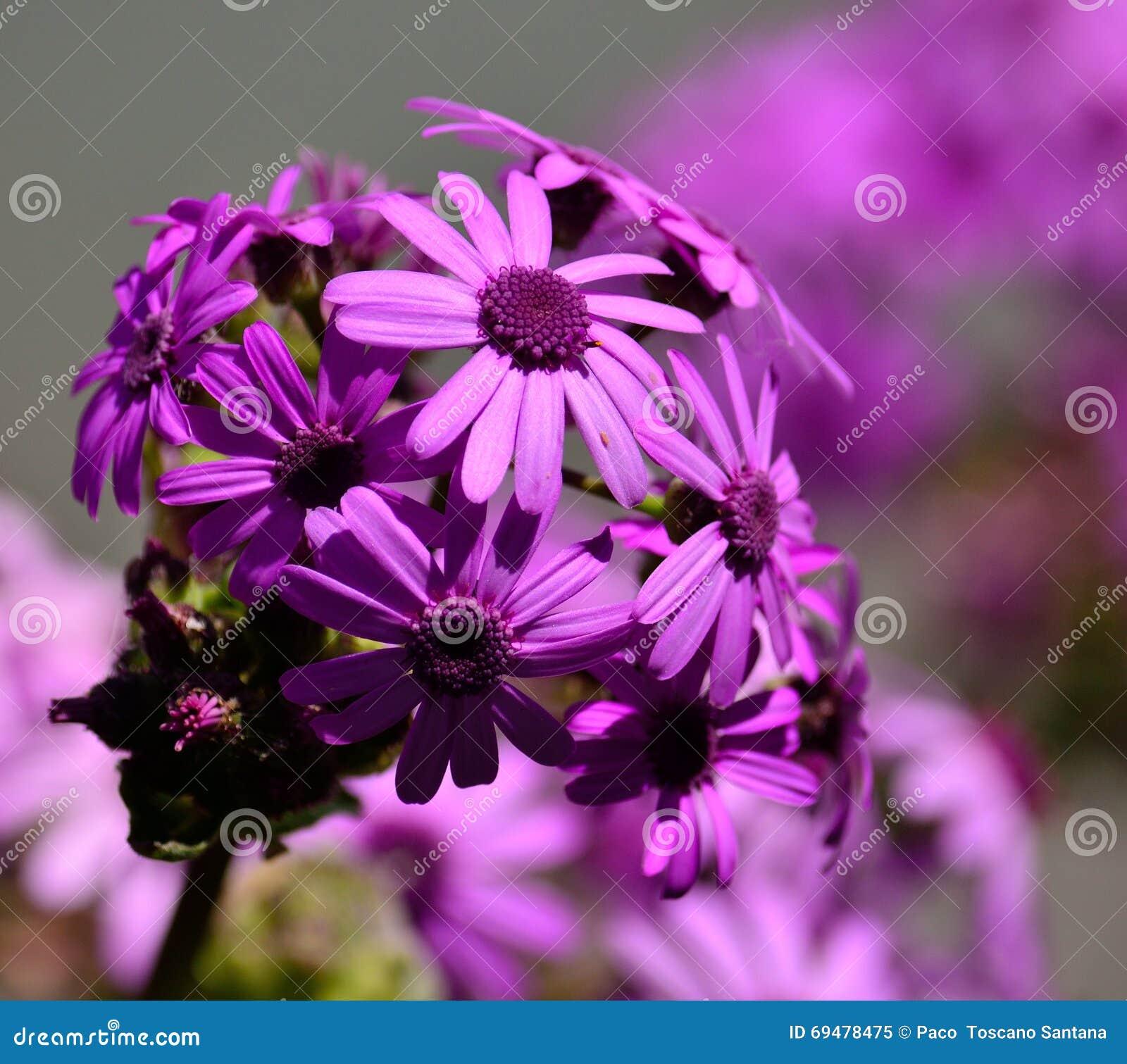 Elegant Blumen Mai Beste Wahl Pattern Mai-blumen Stockbild. Bild Von Pracht, Mayflower,