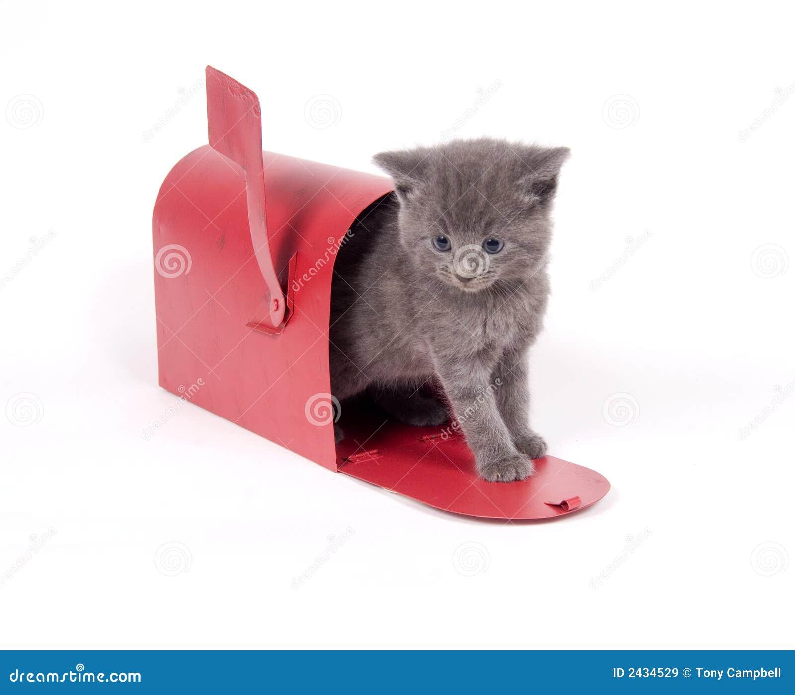Mail order kitten stock image Image of gray newborn