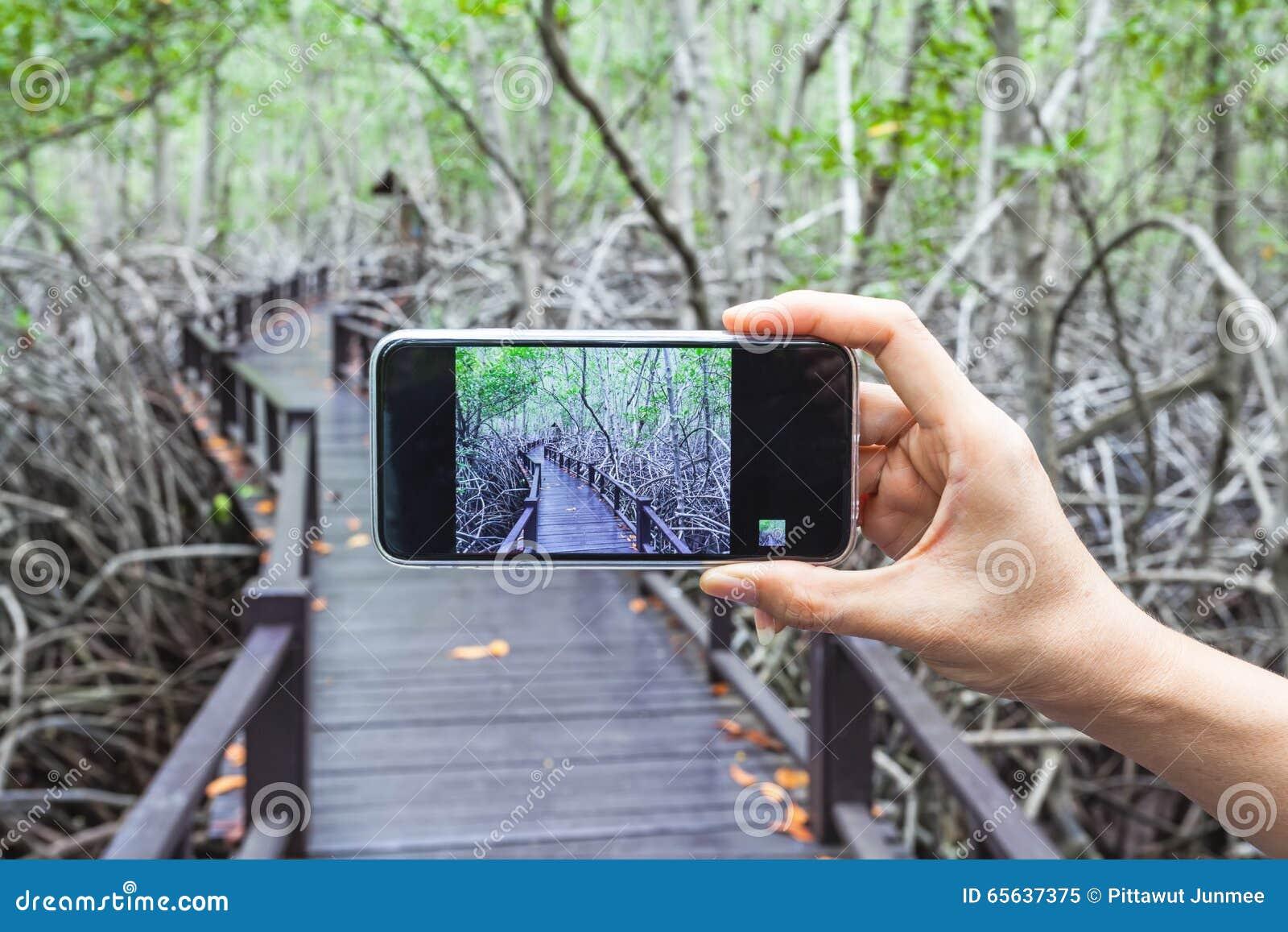 Main de fille prenant des photos à un téléphone portable dans le pont en bois