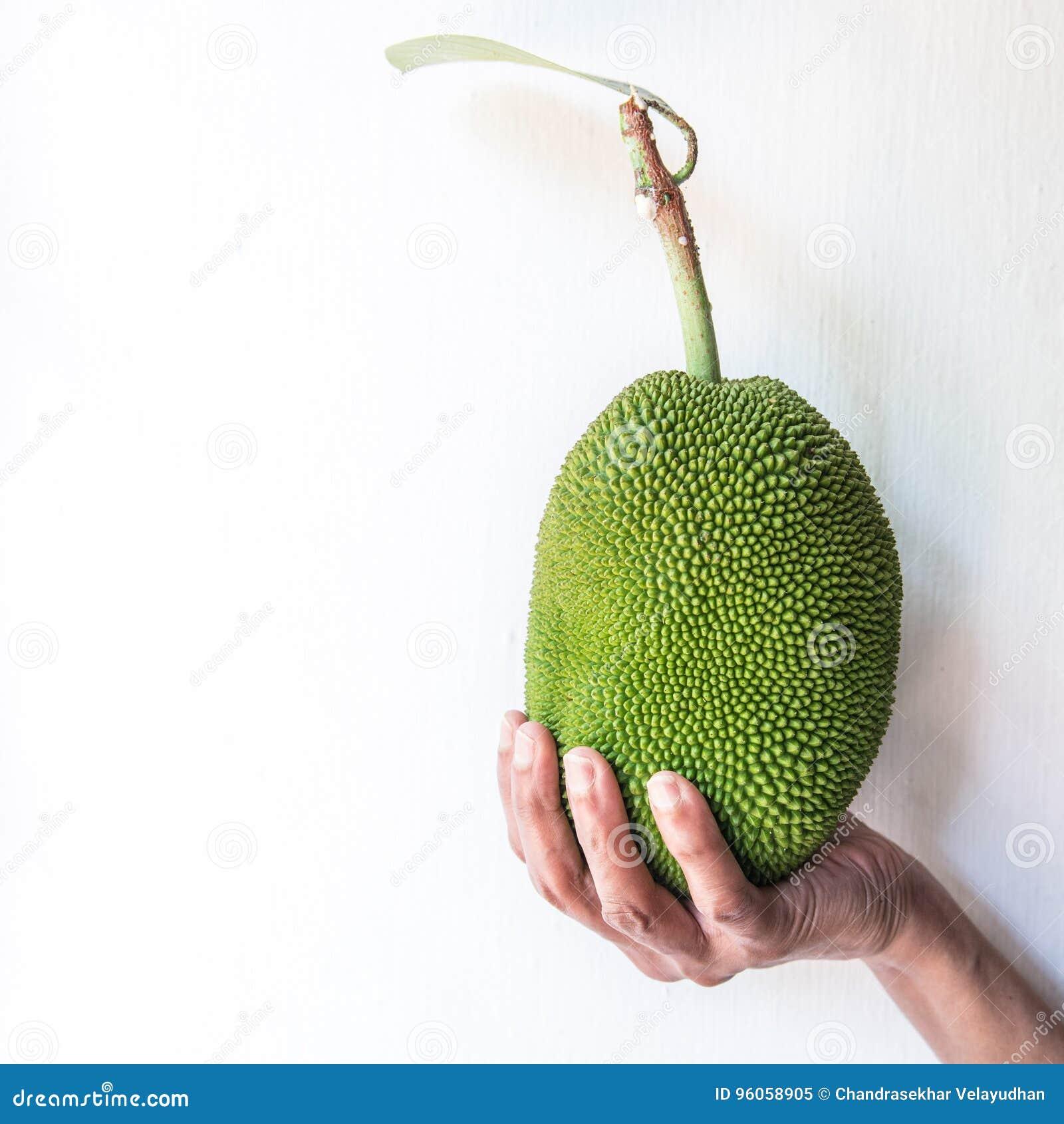 Main tenant le petit fruit de cric