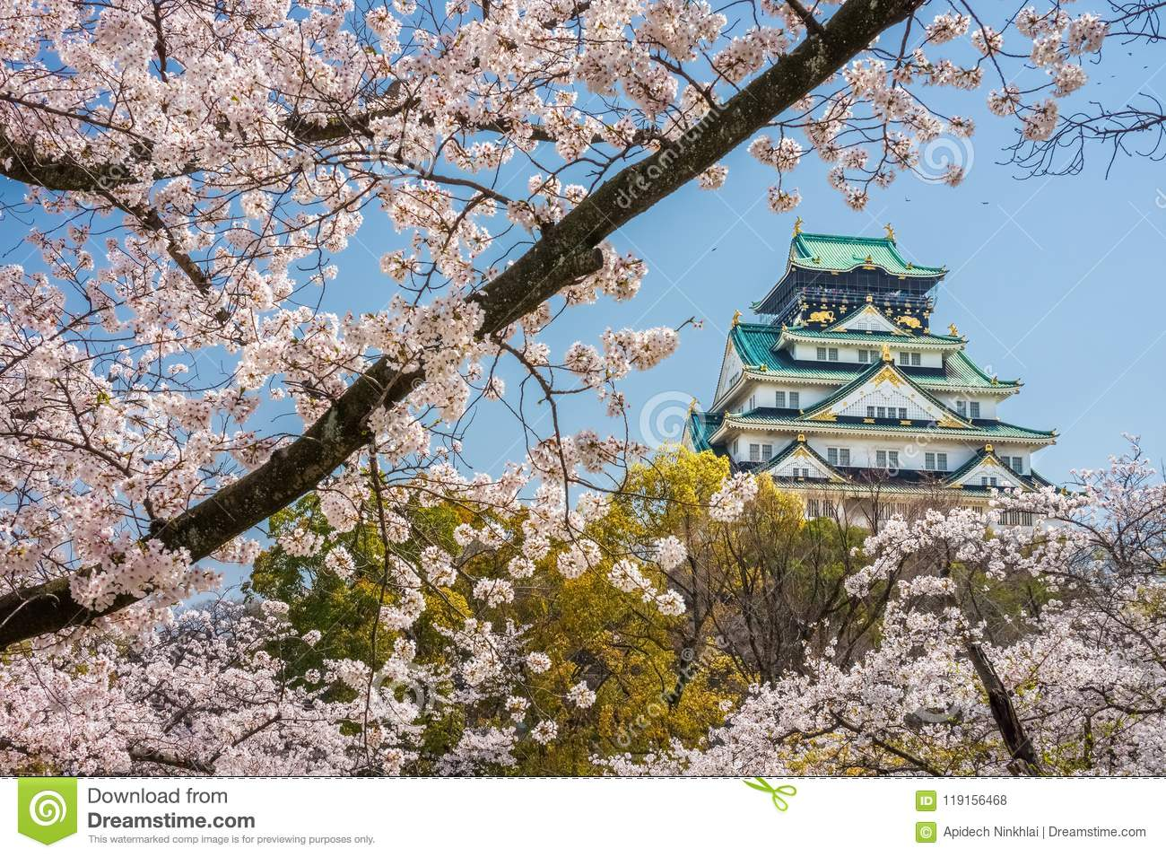 Main tower of Osaka Castle with cherry blossom flowers view from Nishinomaru Garden