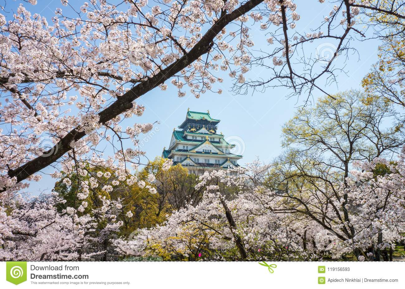 Main tower of Osaka Japanese Castle view from cherry blossom Nishinomaru Garden