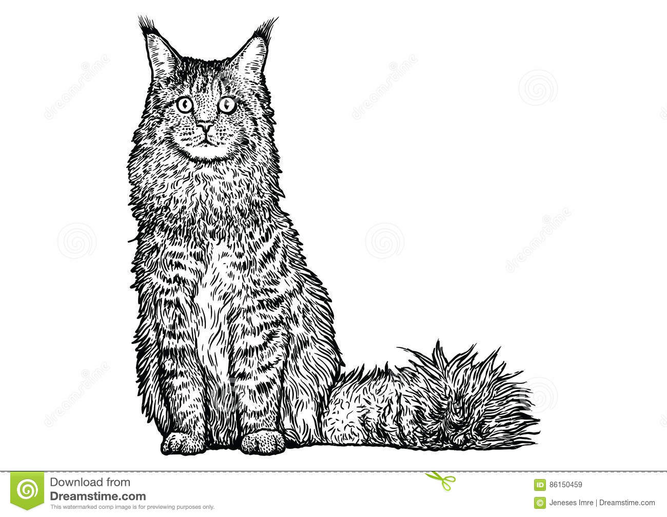 Maine Coon Cat Illustration Drawing Engraving Line Art
