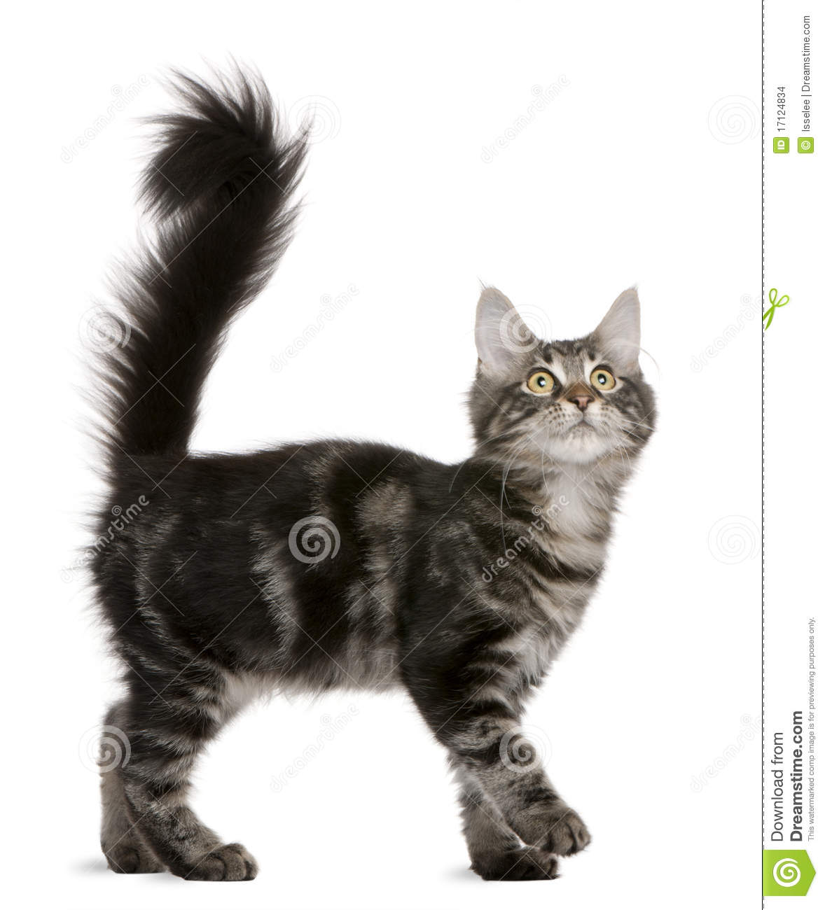 cat with knife pointed at it