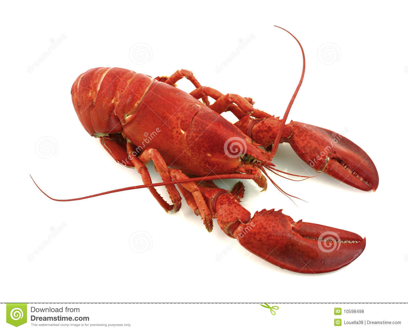 Maine lobster royalty free stock photos image 10598498 for Best time to visit maine for lobster