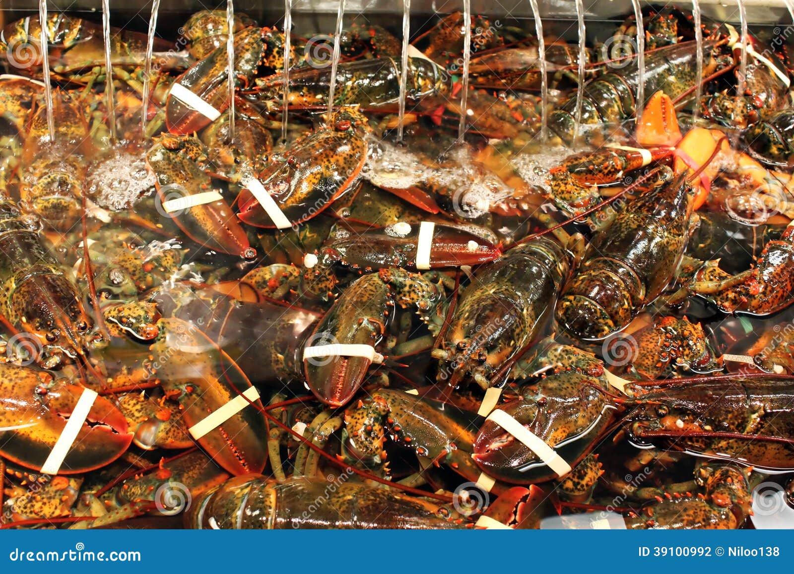 Maine-zeekreeften