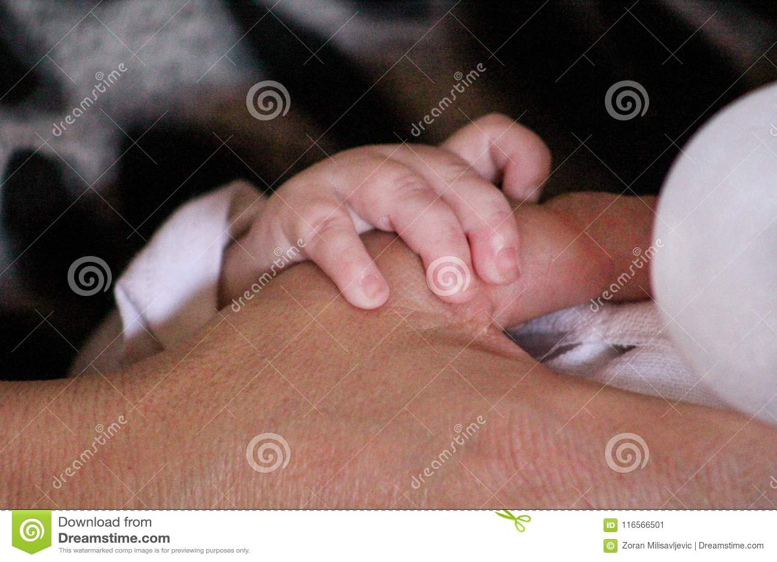 Mains de mère et de chéri La petite main de bébé tient une main de mère tout en l alimentant avec une bouteille