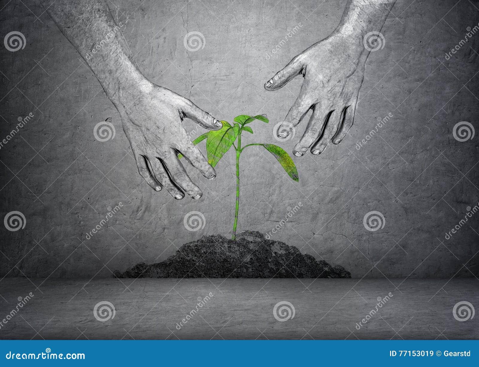 Mains de plante verte émouvante de l homme dans le sol sur le fond concret