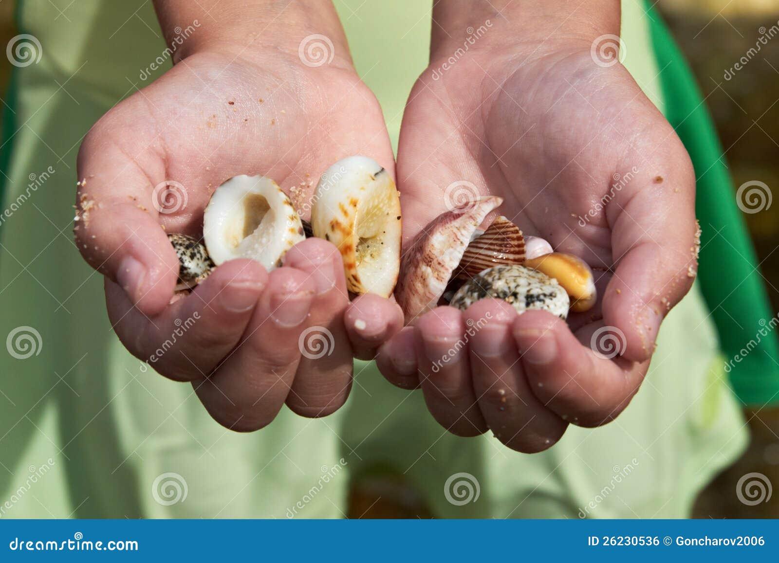 Mains du `s d enfant avec des Seashells
