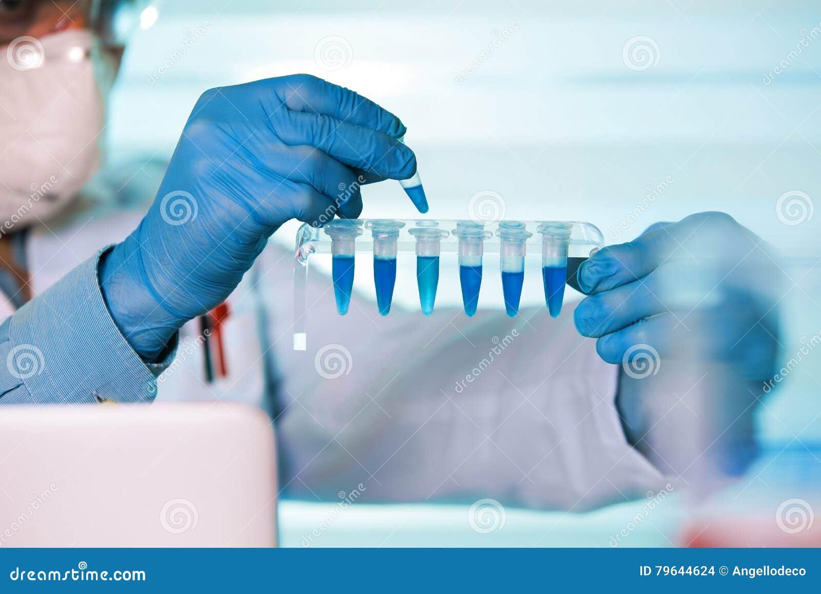Mains du travail génétique de génie biomédical dans le laboratoire