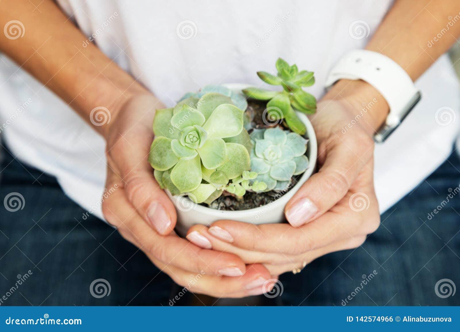 Mains femelles tenant le pot avec les usines succulentes