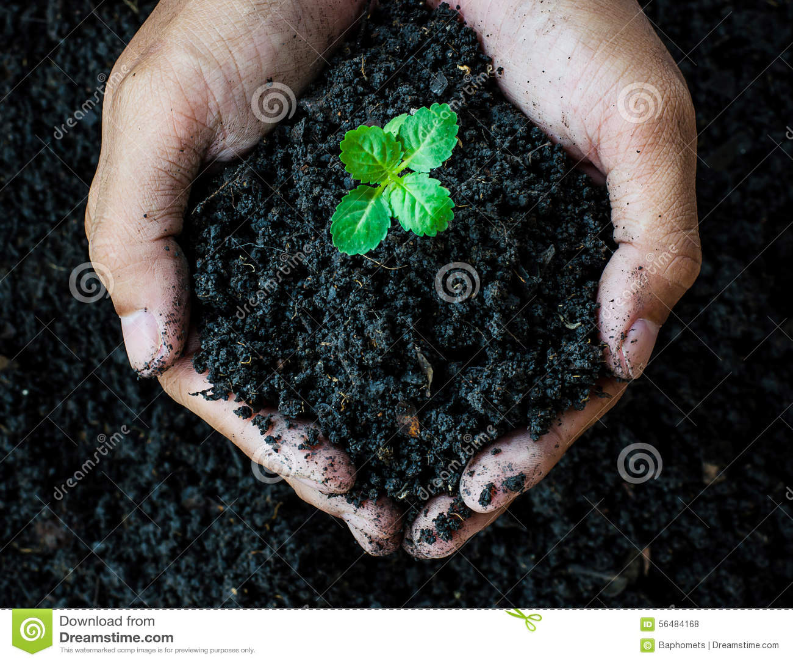 Download Mains Tenant Le Sol Avec La Jeune Usine Photo stock - Image du ambiant, environnement: 56484168