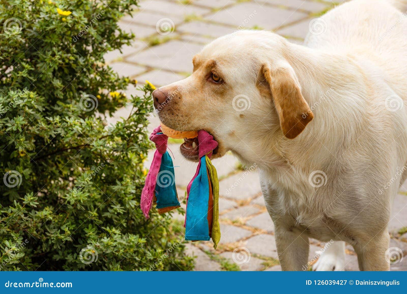 Maintenu dans le jouet de chien de bouche