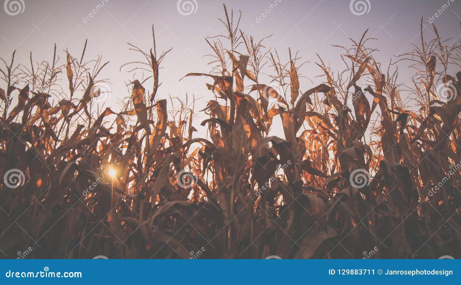 Mais-Aktien im Oktober